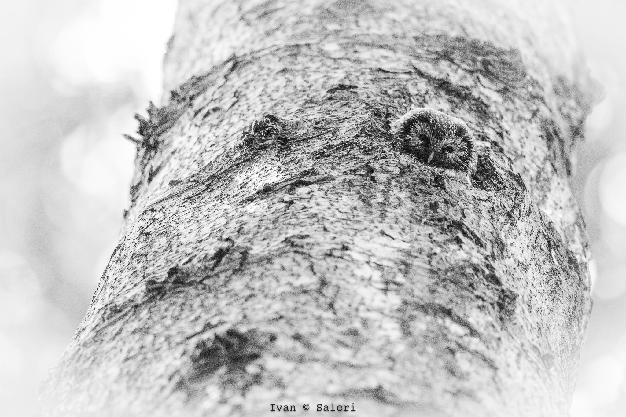 The forest hides secrets .......