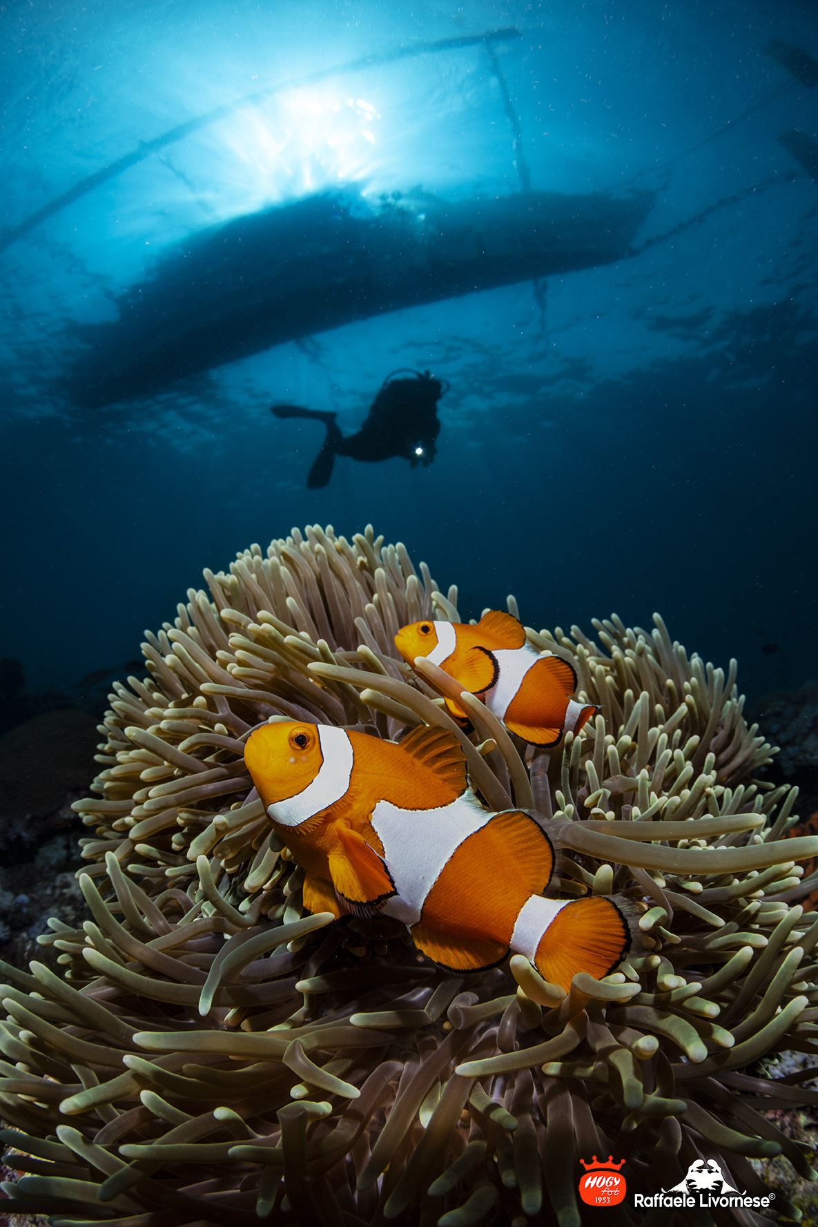 Underwater seascape with clowfishes...