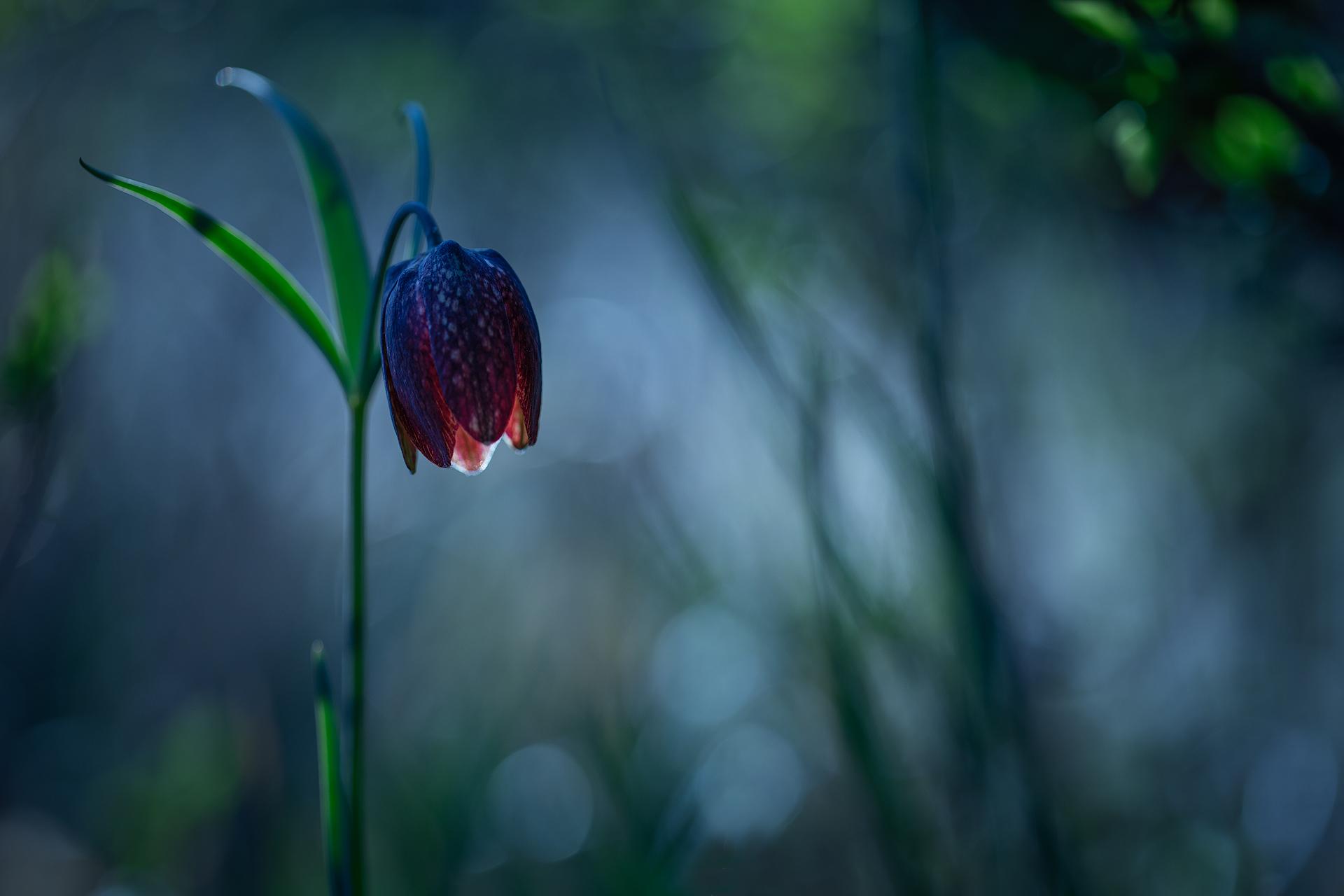 Una lanterna nel bosco...