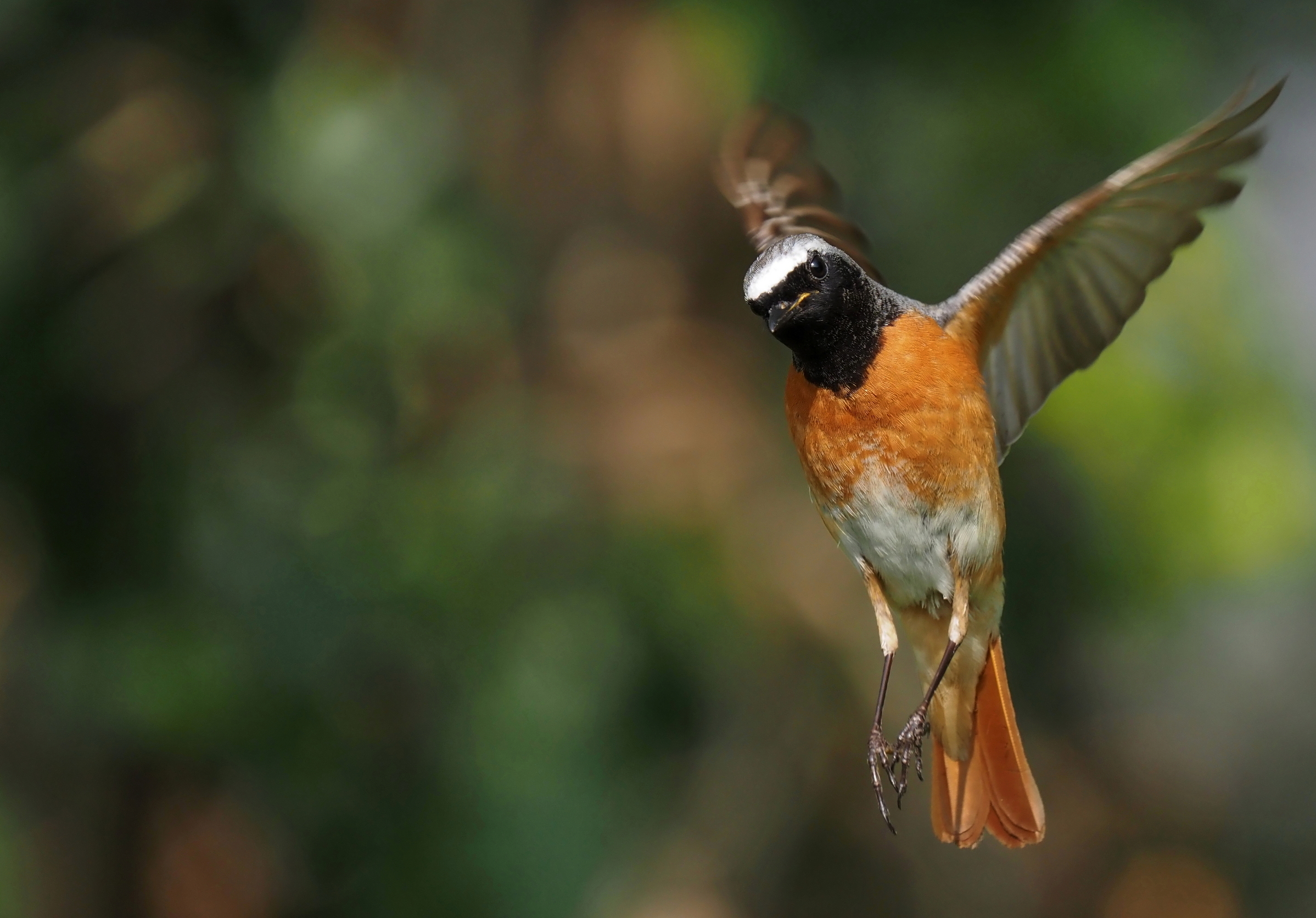 Suspended in flight...