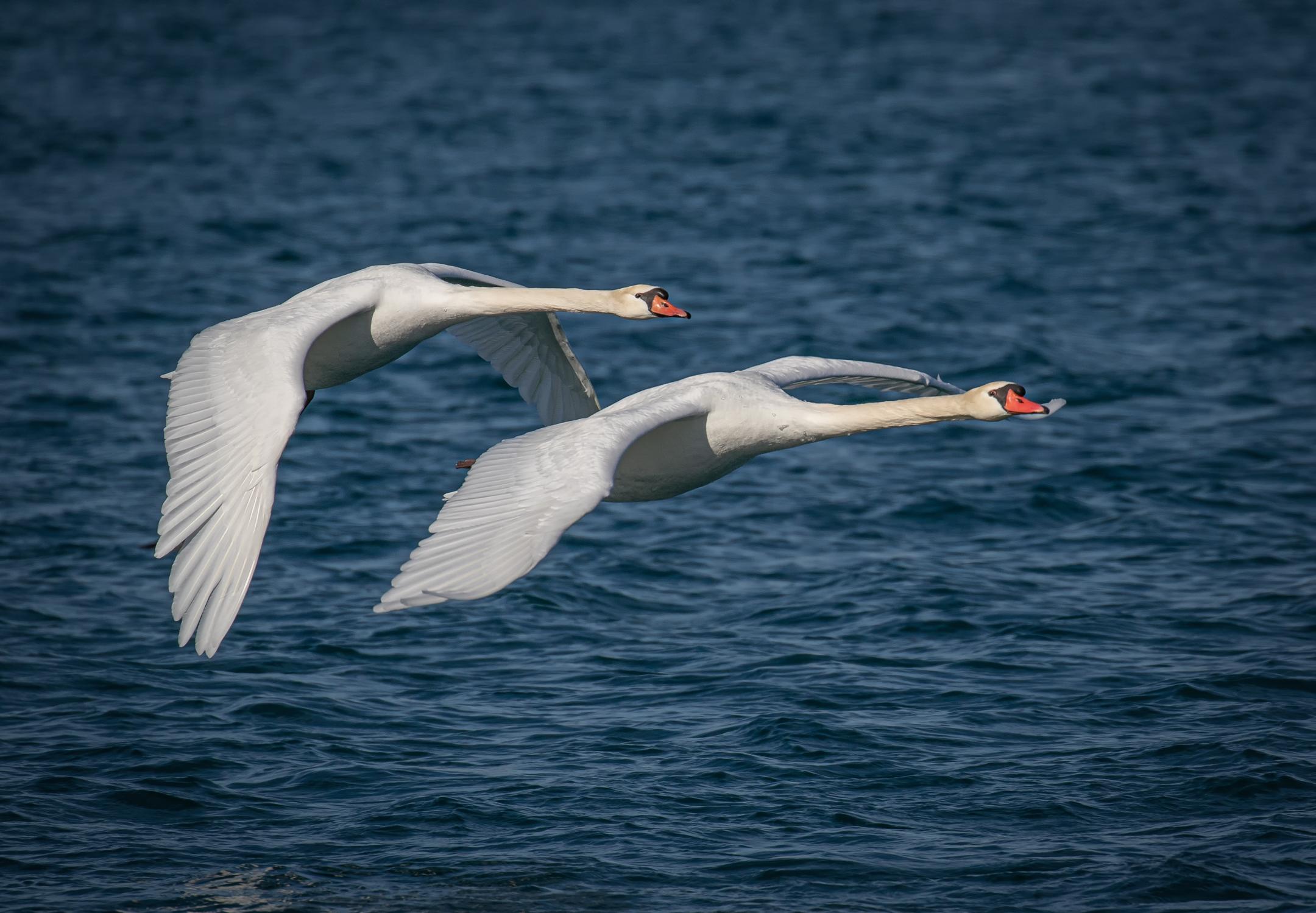 Flying in Tandem....