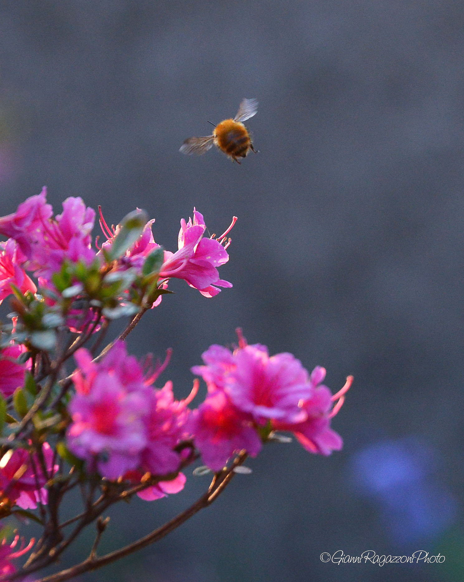 Bee at work...