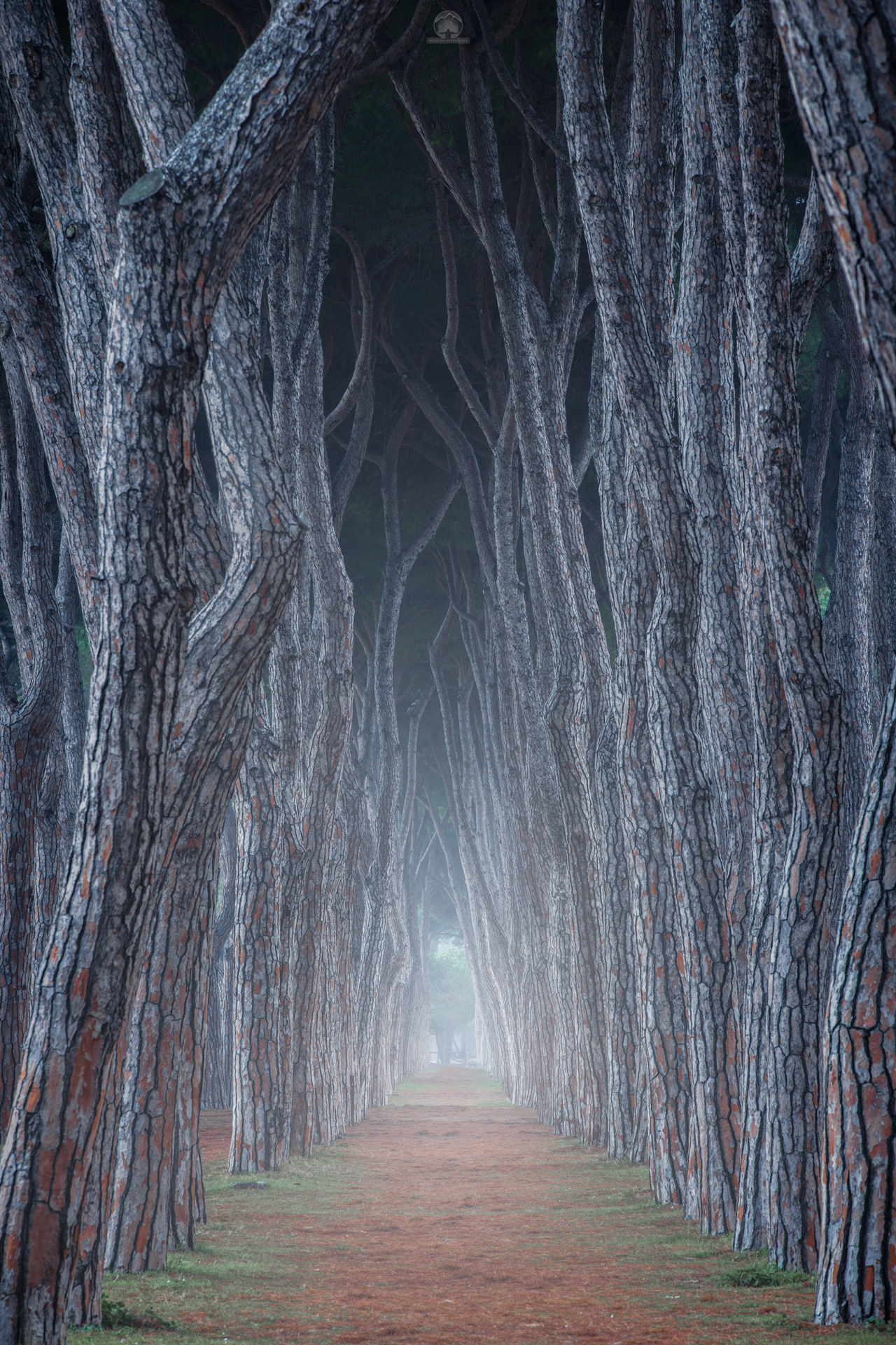 Natural Road, New Year ...