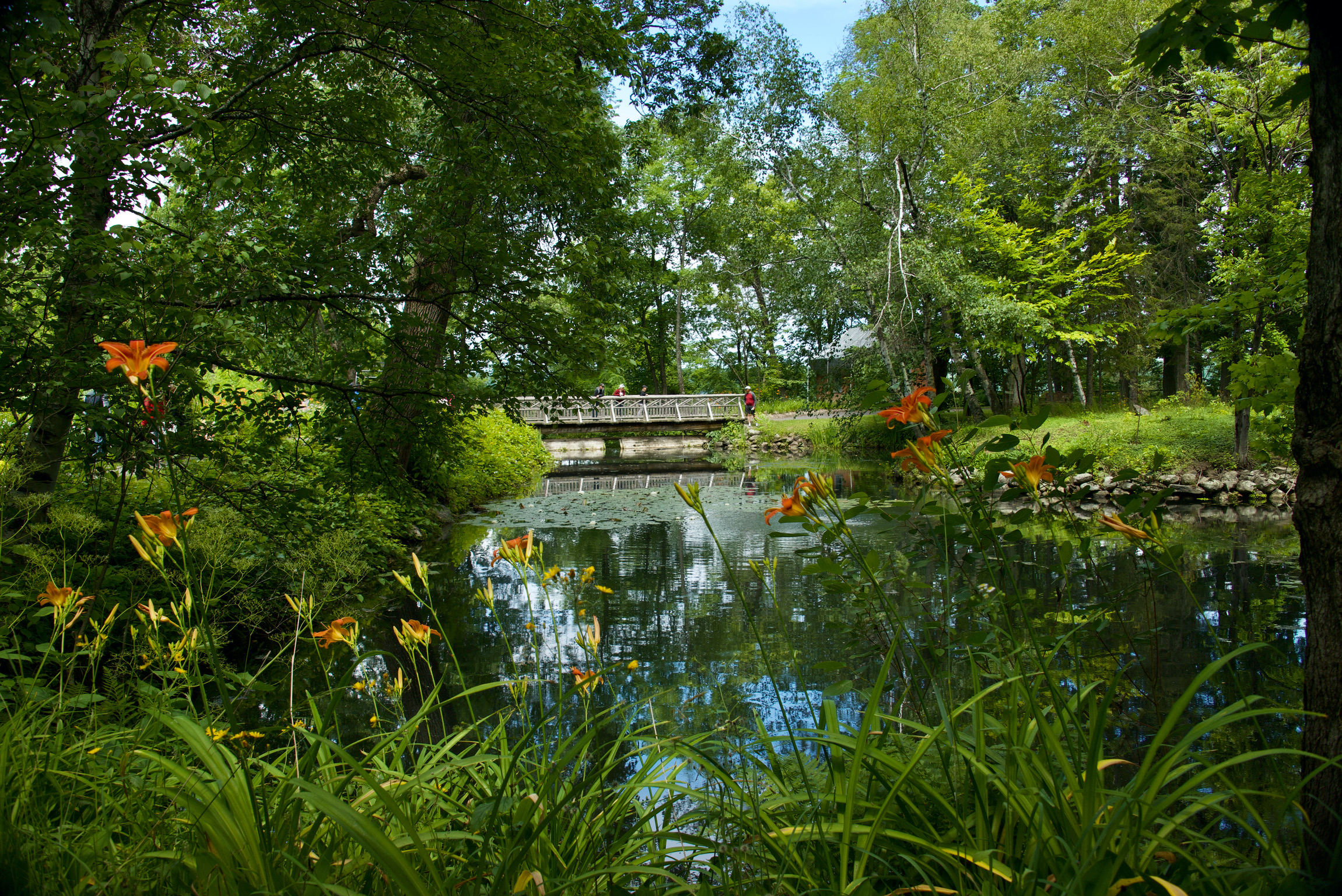 Dream garden for you, bridge reflection...