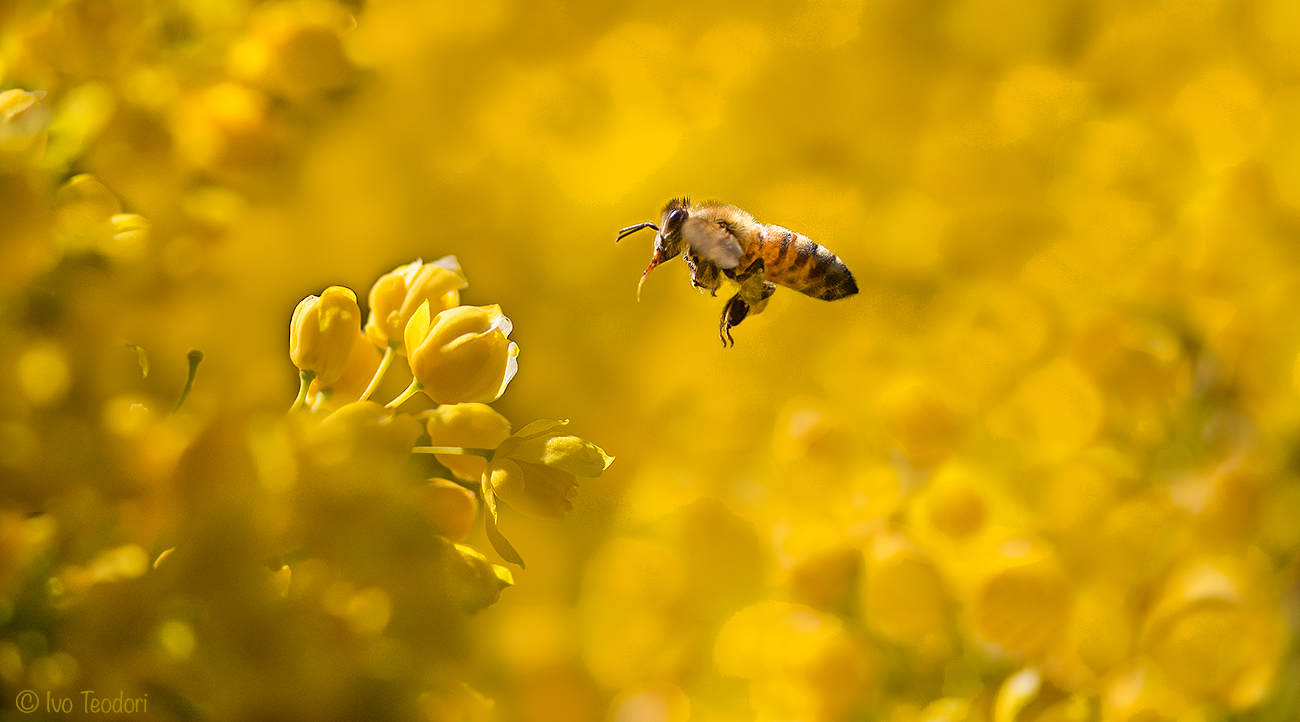Will bees save the world?...