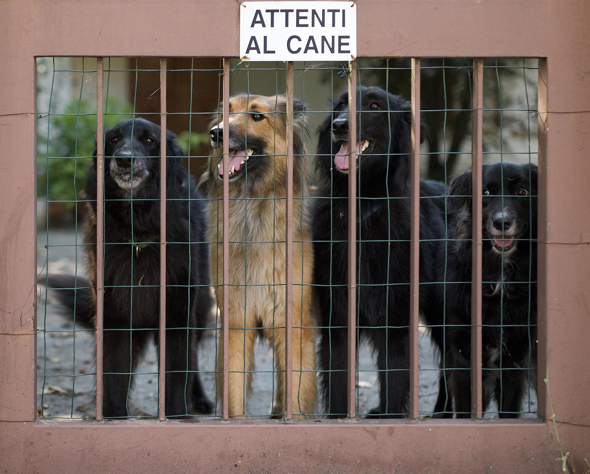 Beware of the dog!...