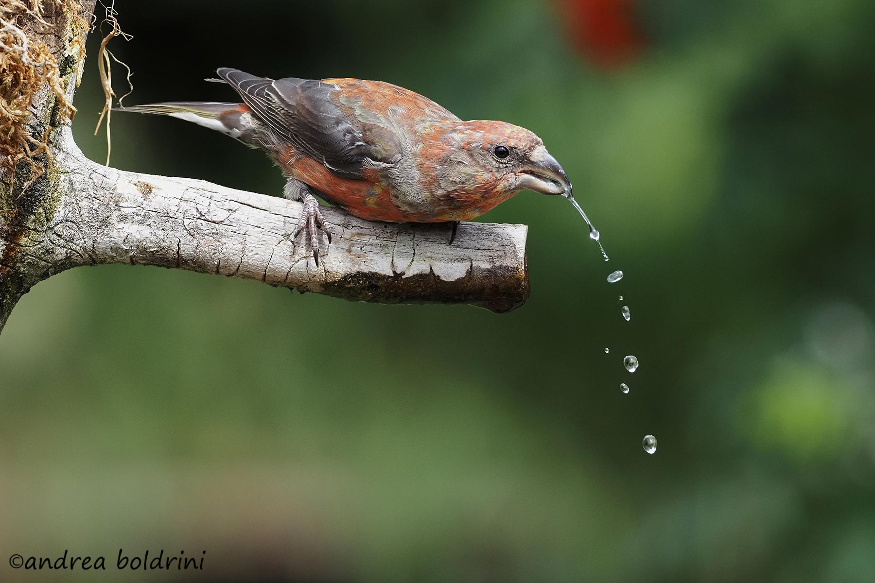 Thirsty...
