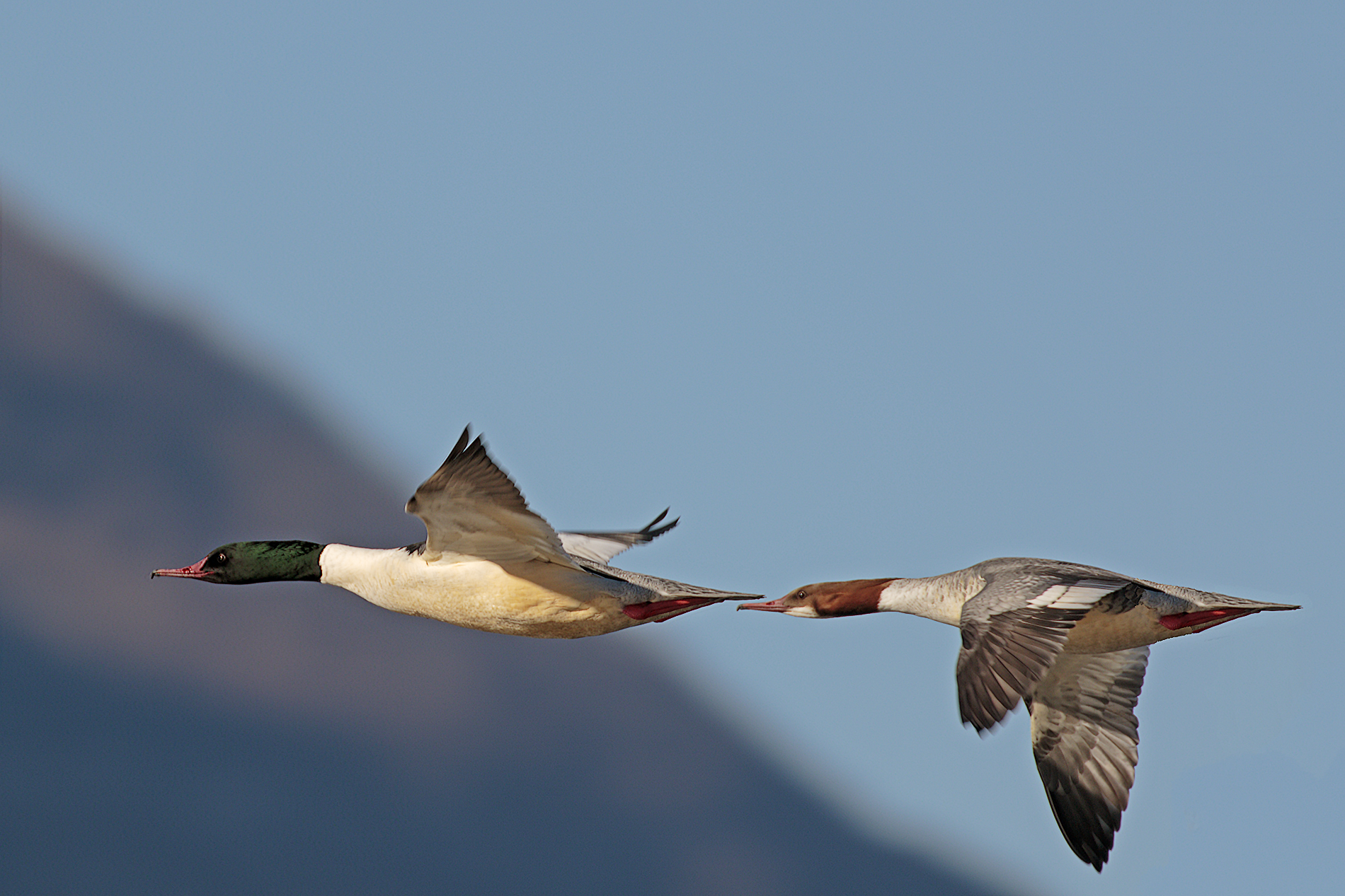 Couple in flight...