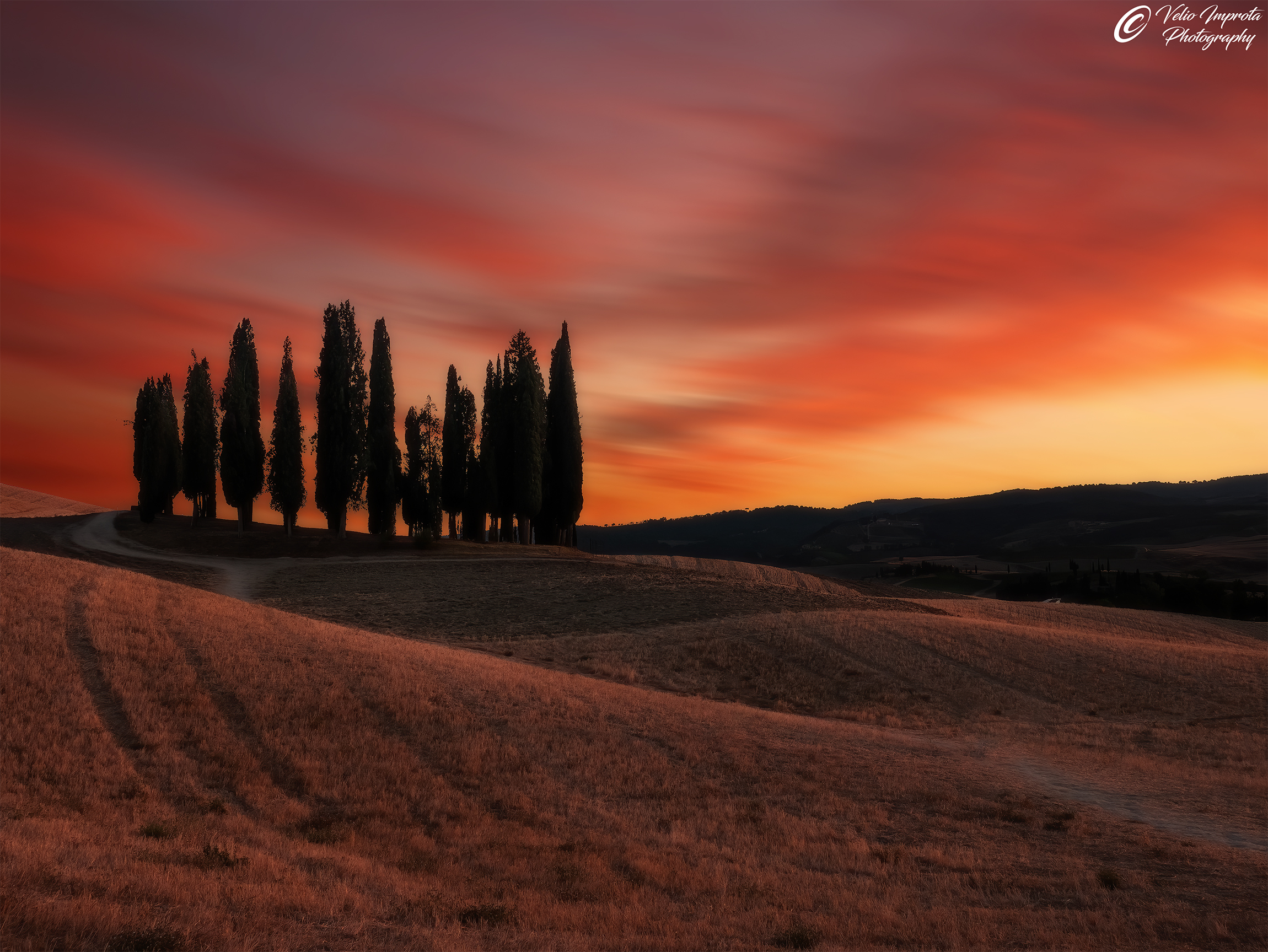Cypresses at sunset red...